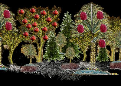 Ultimate Living: largetrees in colour with pomegranates and dates