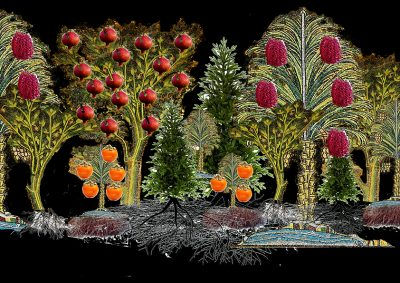 Ultimate Living: largetrees in colour with pomegranates and dates and persimmons