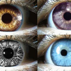 11 multi iris glue